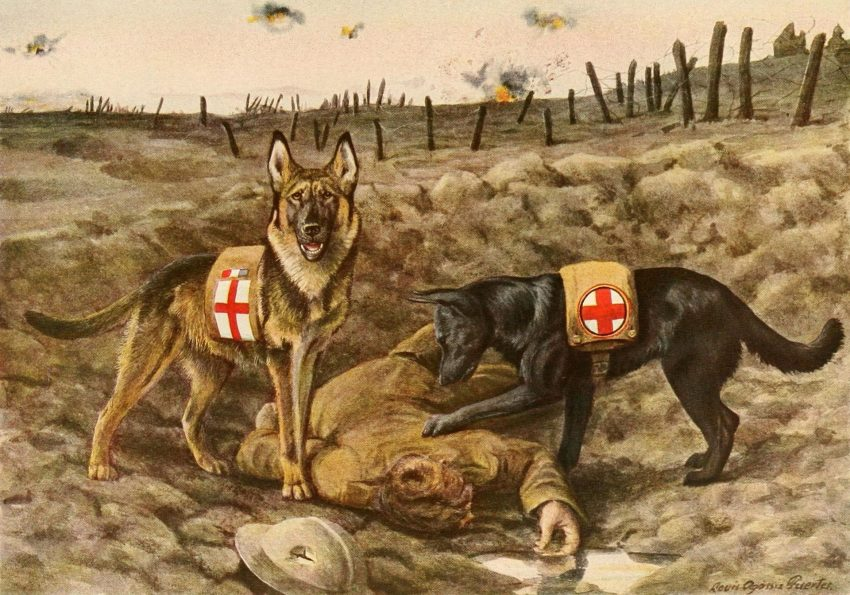 Only 1 in 10 people can pass this World War I quiz. Can you? I wouldn't be so sure about it